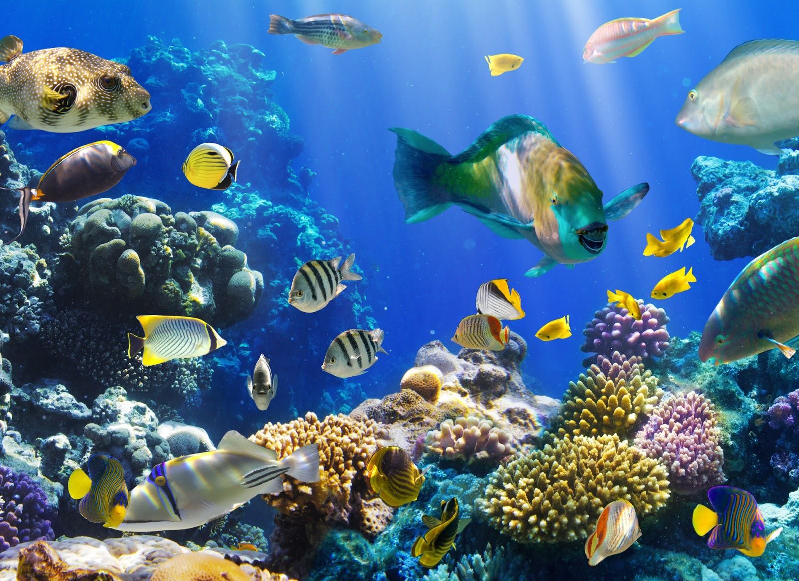 Sustituir la tecnolog a a la naturaleza como nuevo amo for Acuarios para peces marinos