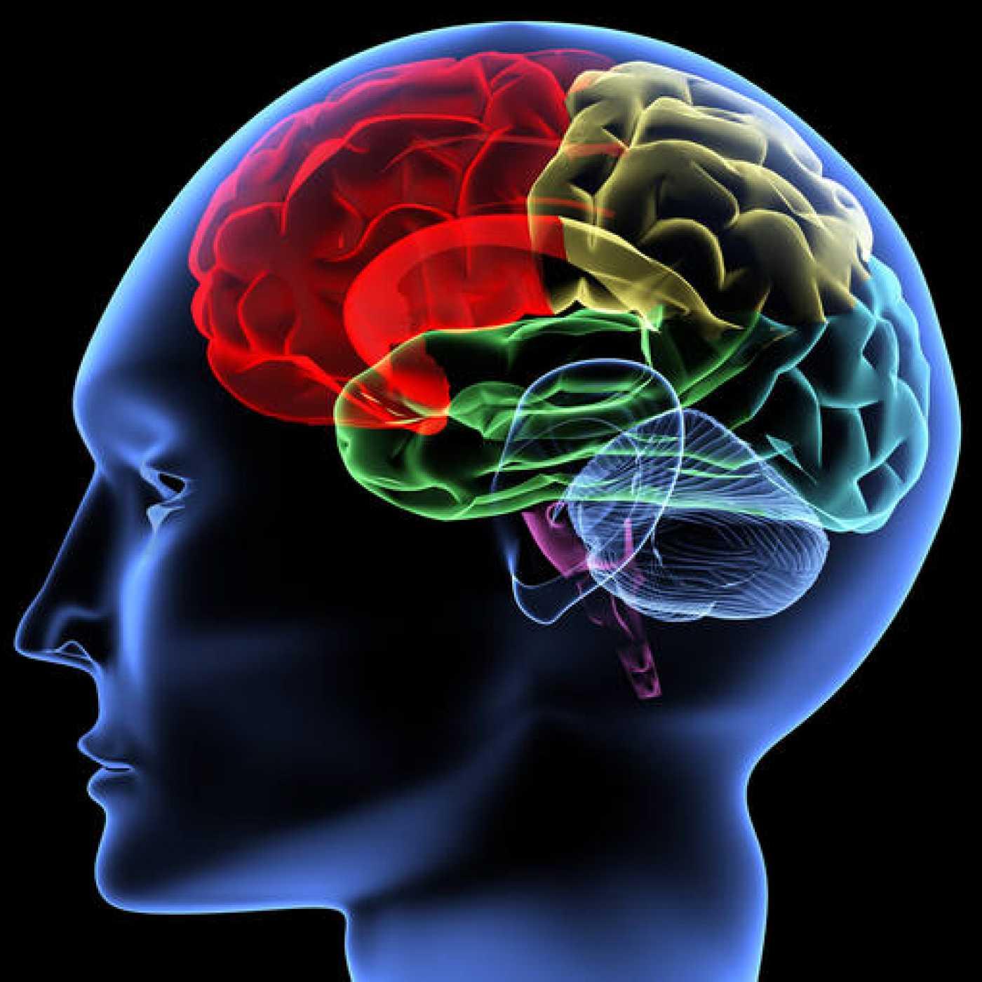 Adivinar el pensamiento ya no es cosa de magia ni de brujería, sino de tecnología (explica el neurocientífico español Rafael Yuste)